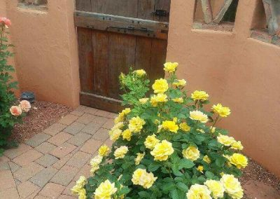 Yellow Rose by The BackGate