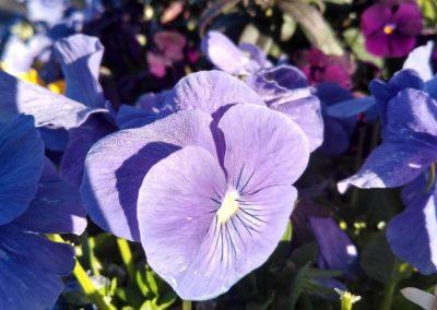 Flowers13-w2
