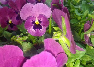 Flowers14-w2