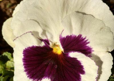 Flowers15-w2
