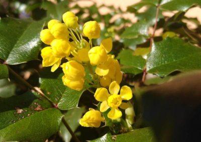 Flowers17-w2