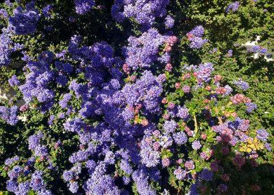 Flowers18-1000x750-w2