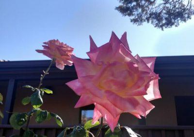 November-flower-w2